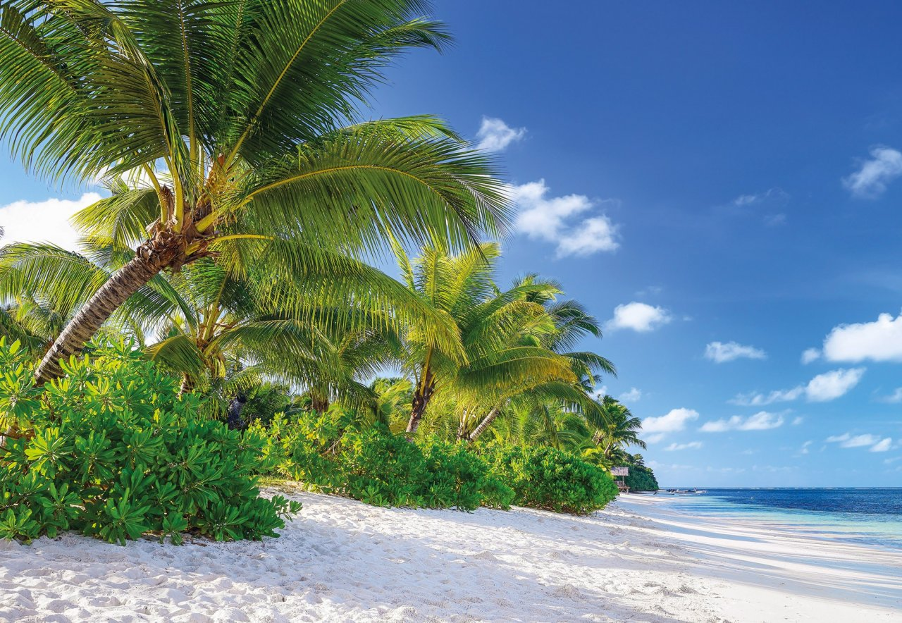 59af04d1453 Fototapeta palmová pláž Réunion 8-992   Obrazové tapety a fototapety na zeď  Komar (368 x 254 cm)
